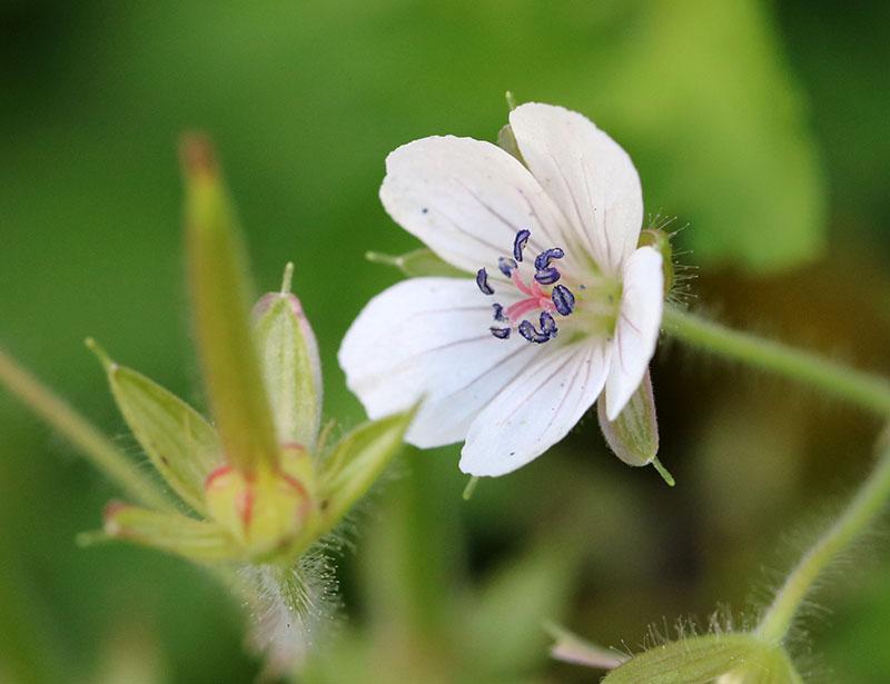 東日本では白い花