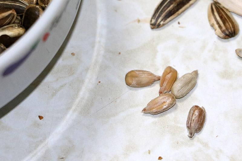 殻を剥いた種