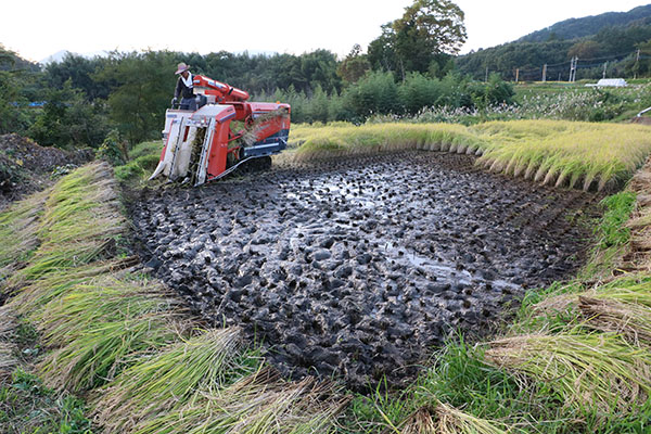 稲刈り機とぬかるみ