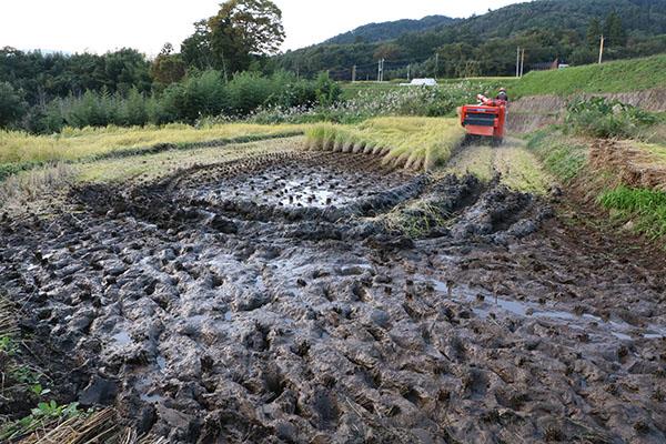 活躍する稲刈り機