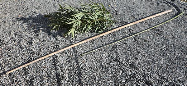 古い竹と新しい竹
