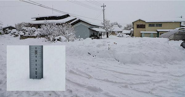 庭先の降雪