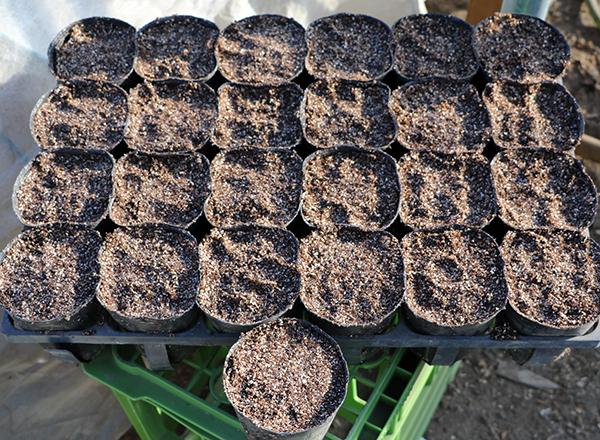 種に培土をかけて押し固める