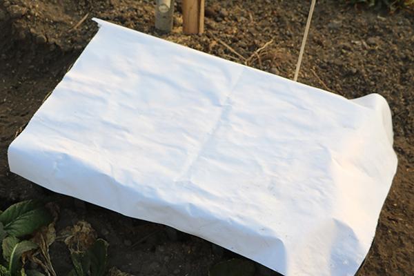 ポットに濡れた紙を被せる